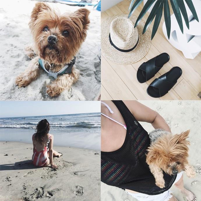 fashionlush, Instagram, yorkie