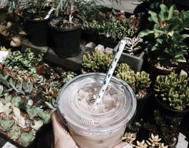 fashionlush, succulents, cactus straw