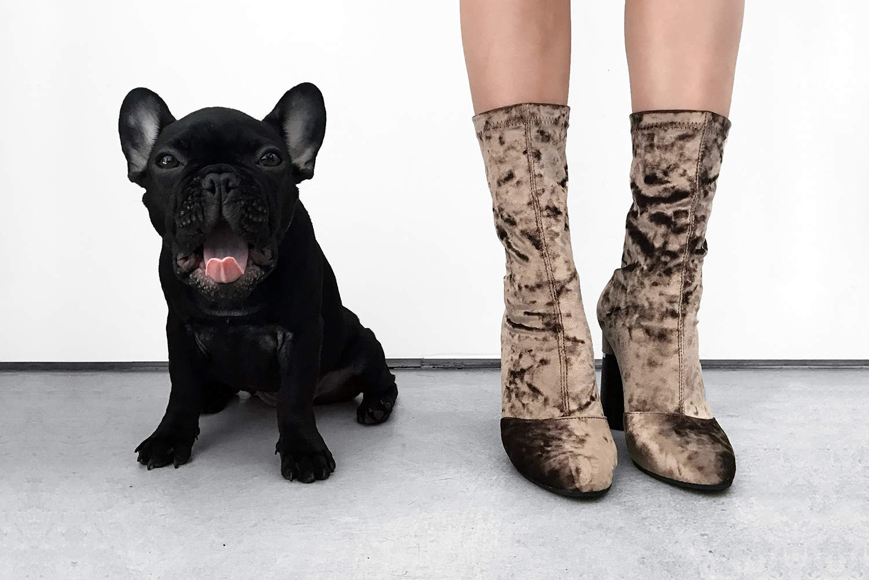 fashionlush, crushed velvet boots, french bulldog